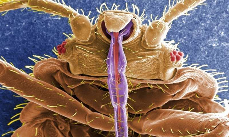 Everything you always wanted to know about bedbugs